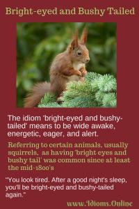 bright eyed and bushy tailed idiom