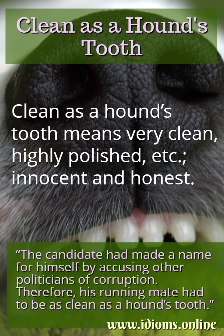 Clean as a hound's tooth idiom meaning