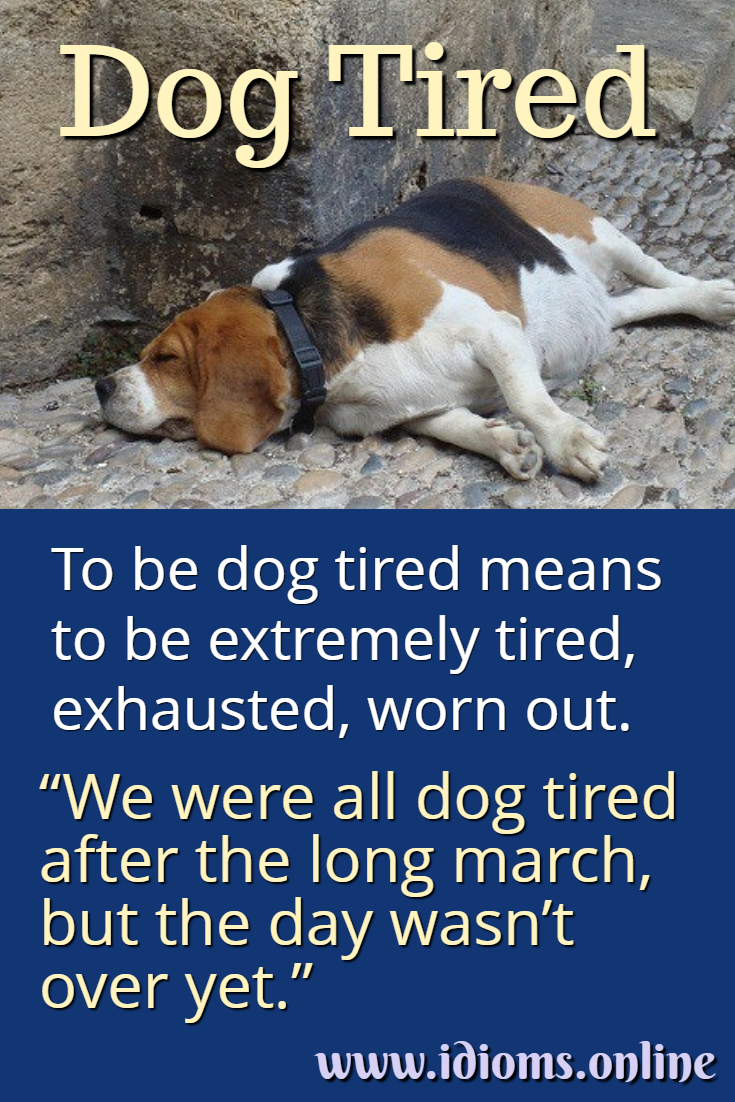 Dog tired idiom meaning