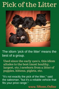 pick of the litter idiom meaning