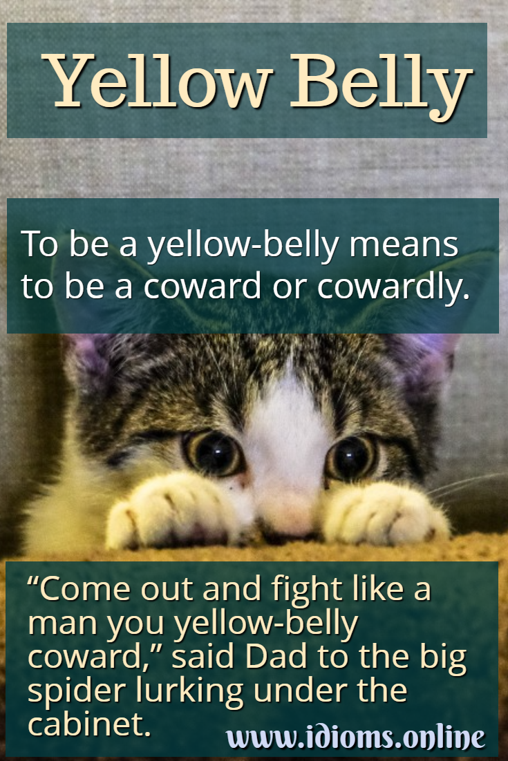 Yellow belly idiom meaning