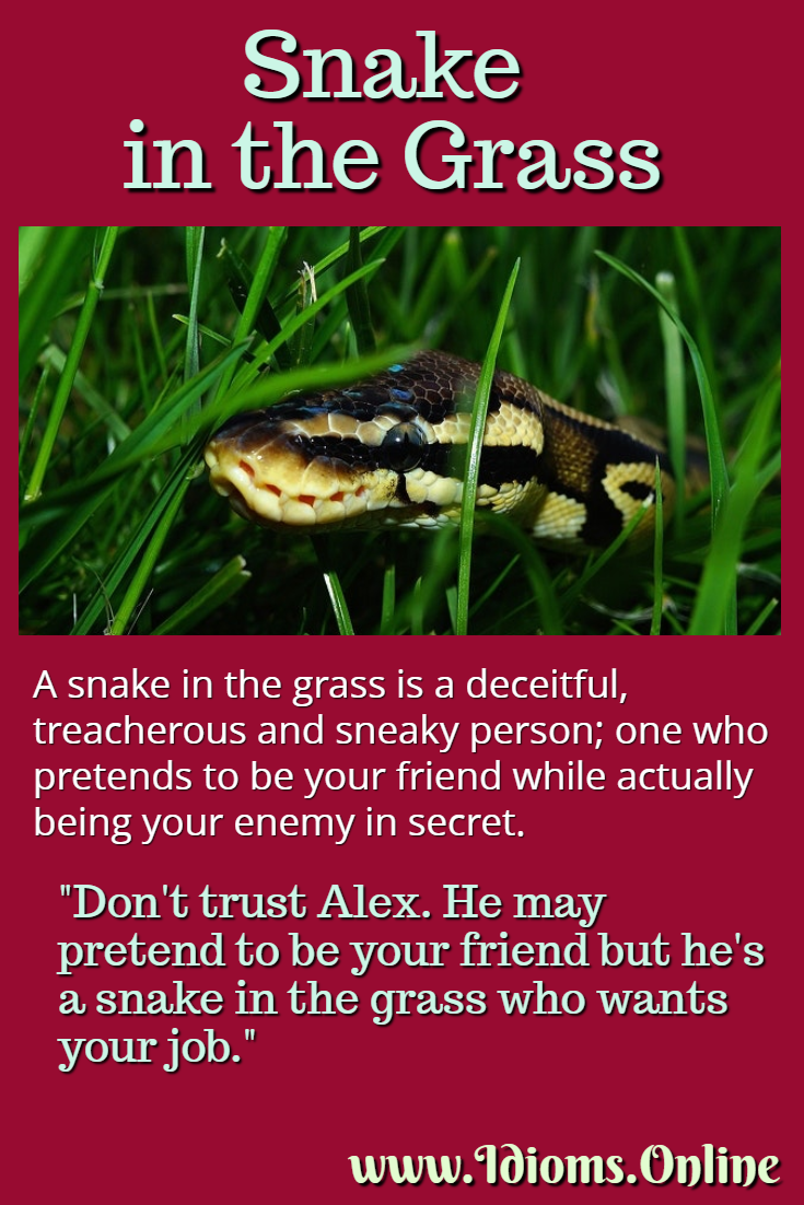 Snake in the grass idiom meaning